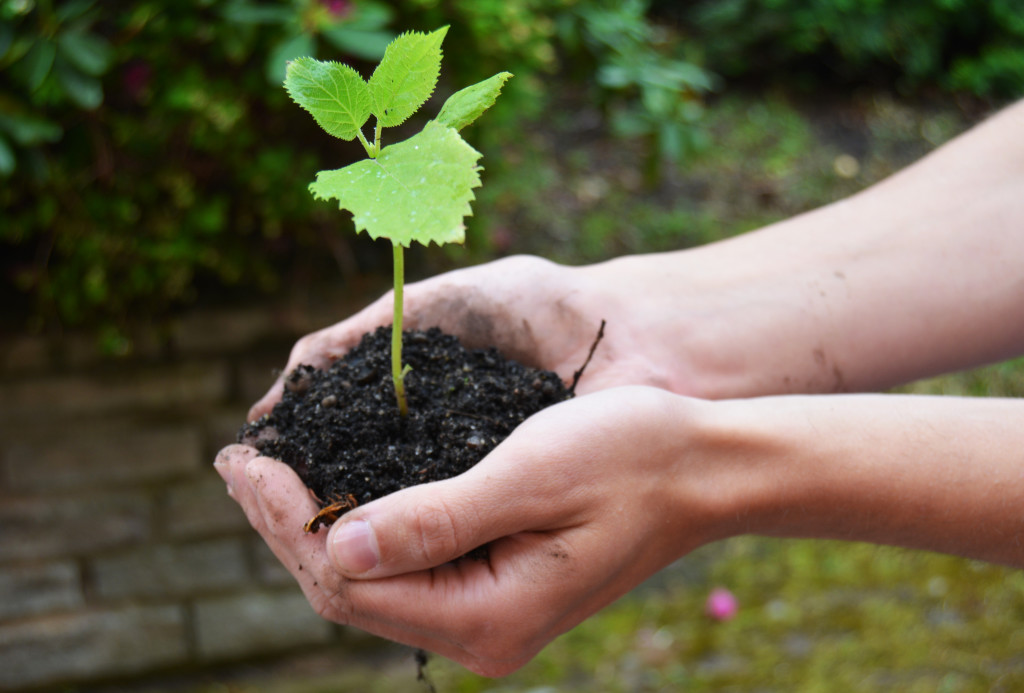 Bild på en liten spröd planta