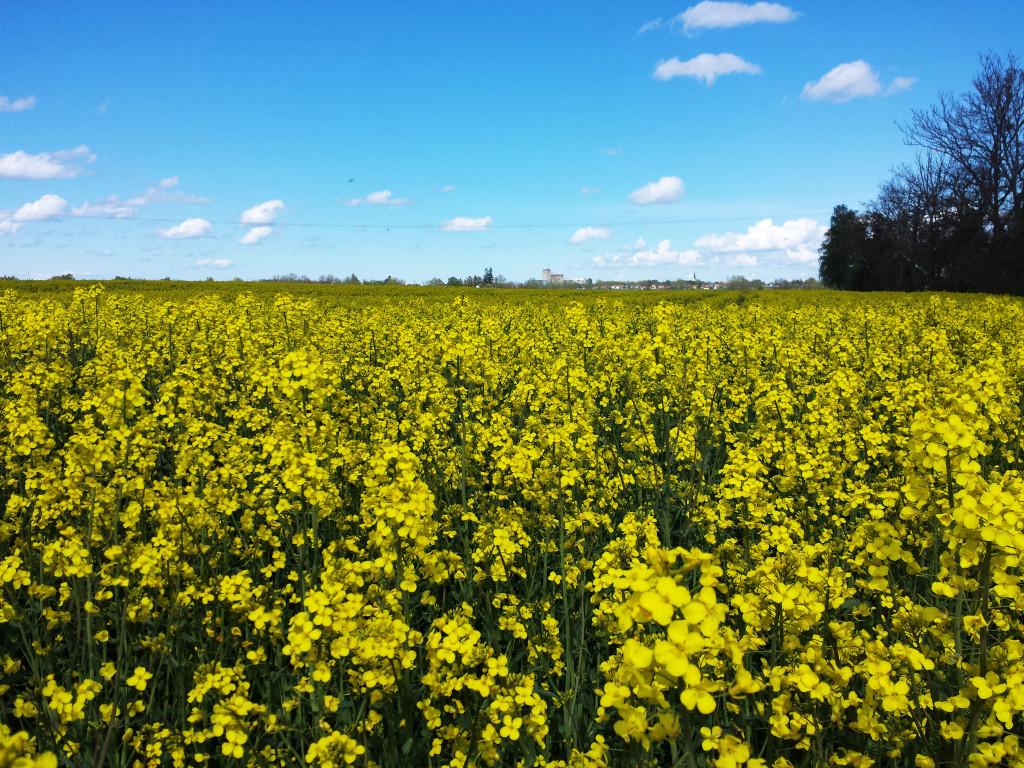 FApsfält och blå himmel. Fotografi