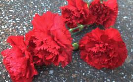 Borgerlig begravning