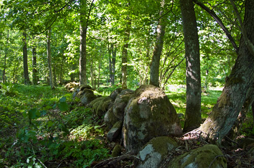 Bilden beskriver en stenmur i en skog