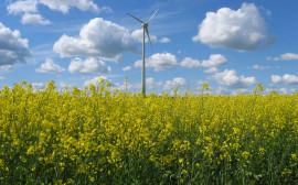 Vindkraftverk på ett rapsfält.
