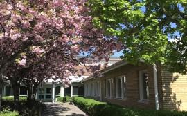 Blommande träd vid Lagman
