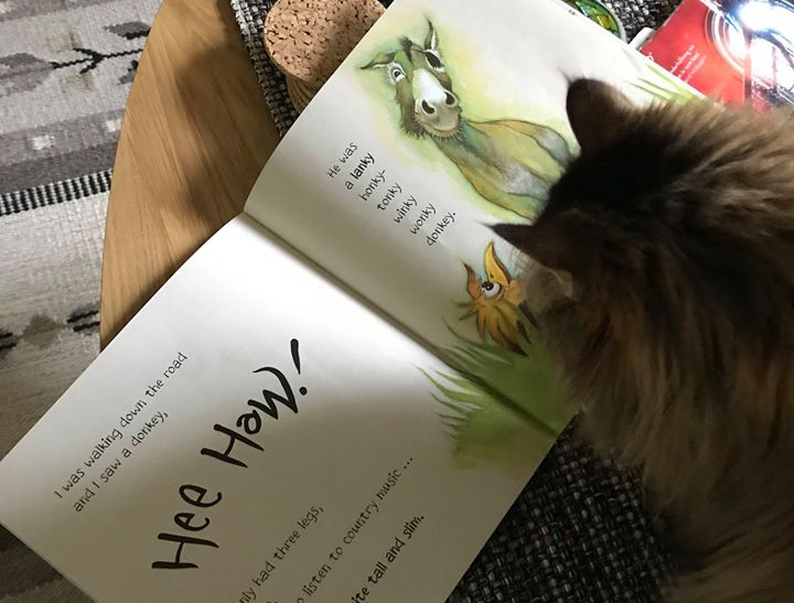 Katt läser en bok