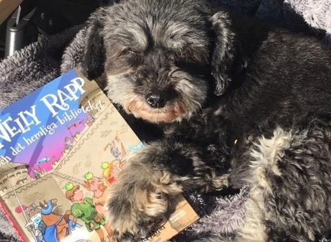 Hund ligger i solen med en bok