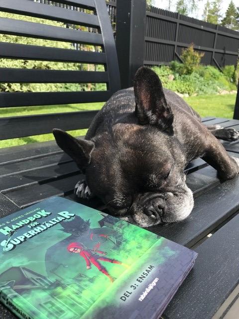 Hund ligger i trädgårdssoffa med en bok