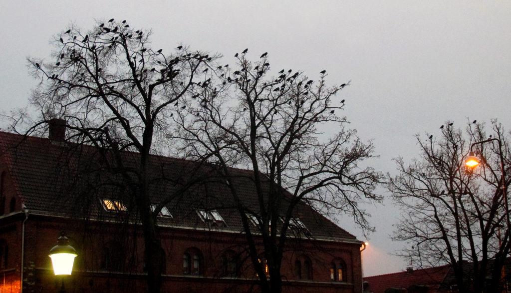 Bilden beskriver fåglar som sitter i ett träd i skymningen