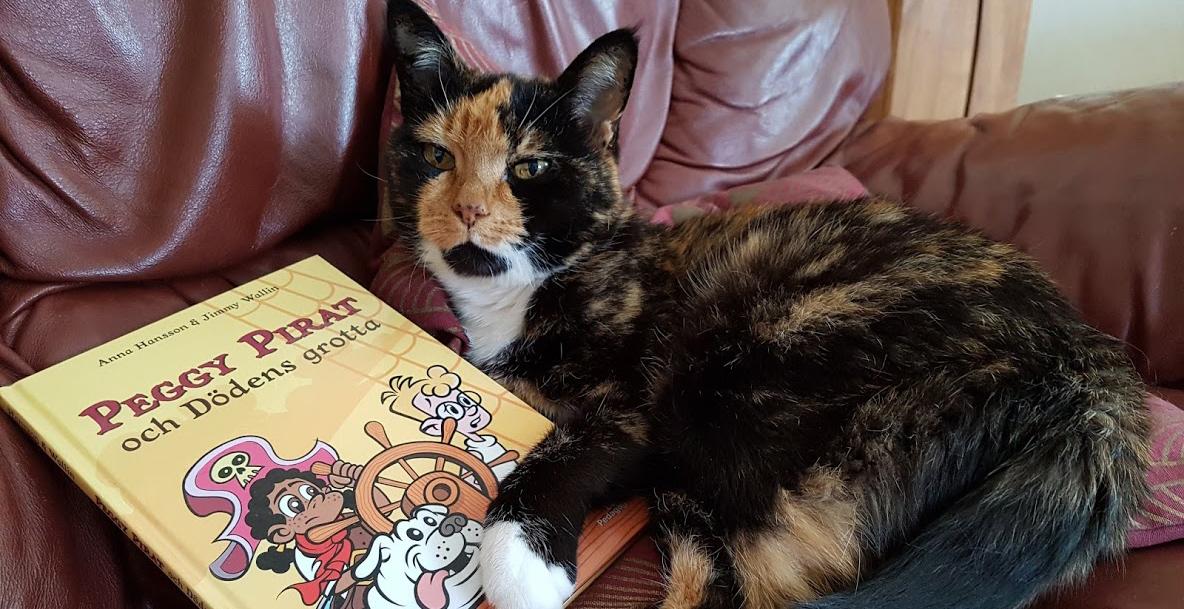 Katt ligger i soffa med en bok
