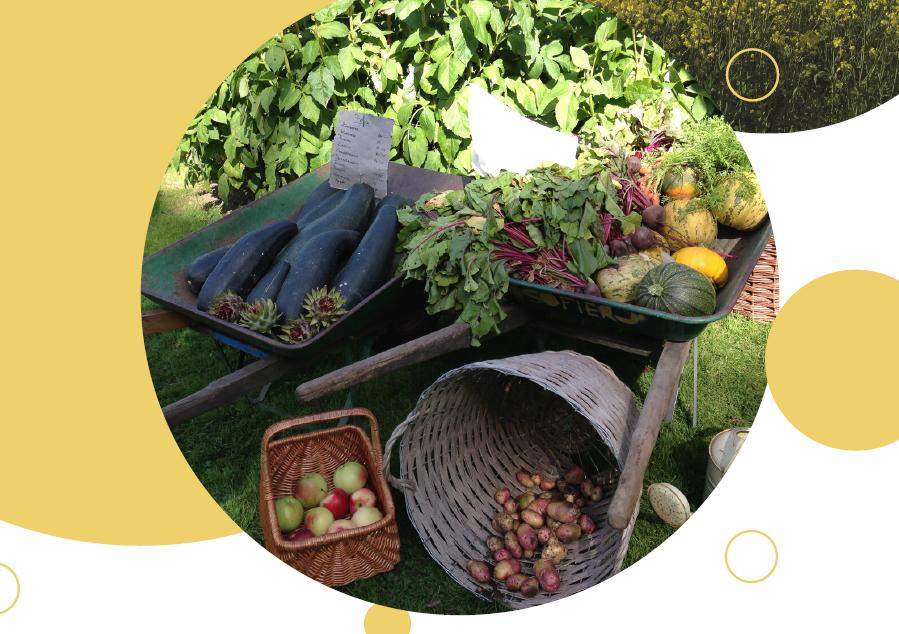 Bilden visar olika grönsaker