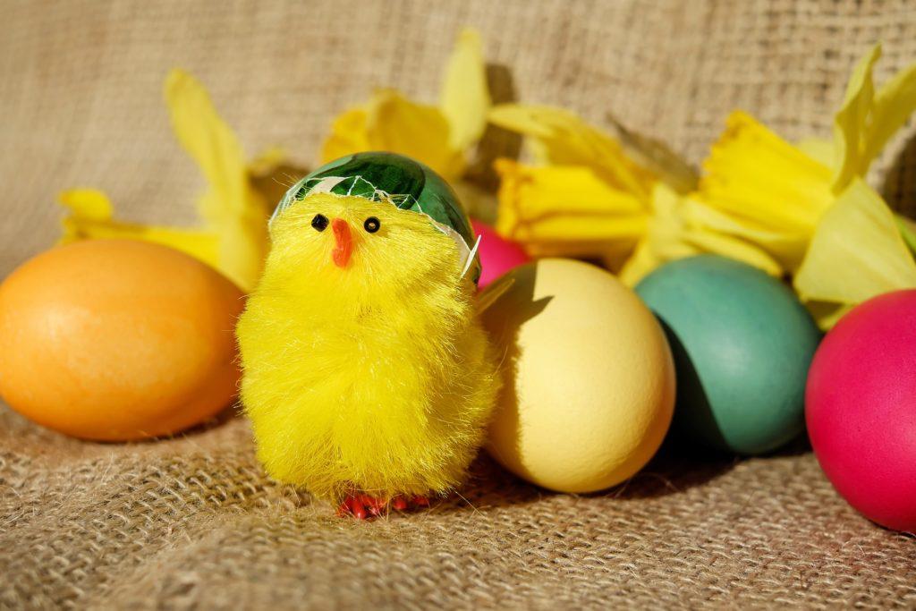 Påskkyckling och färgglada påskägg