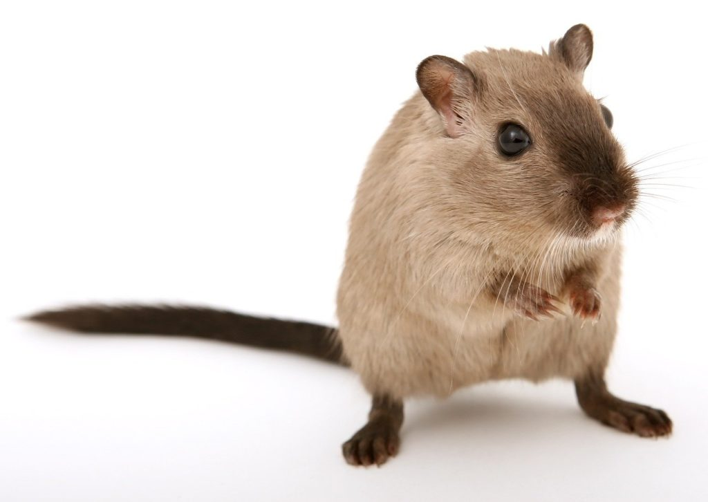 Bilden visar ett skadedjur