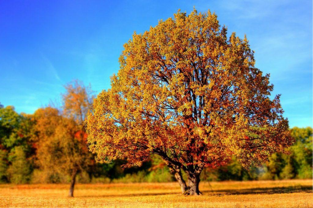 Bilden visat ett träd på hösten